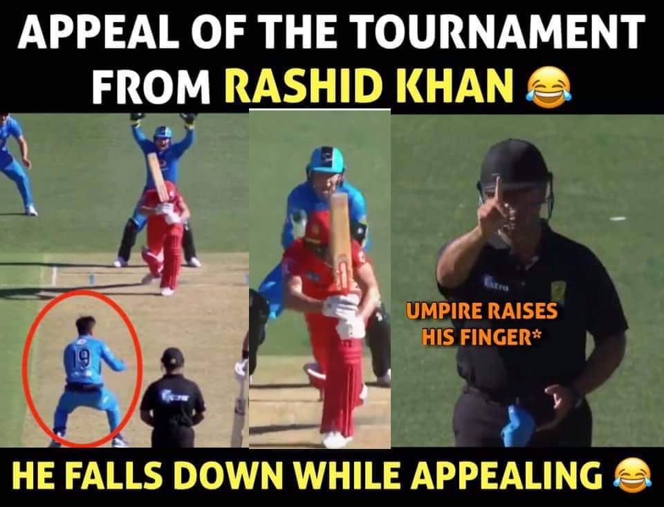 rashid khan celebration